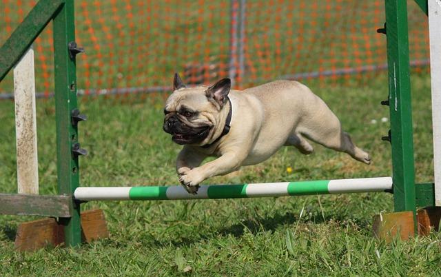 10 conseils d'entraînement pour votre nouveau chien