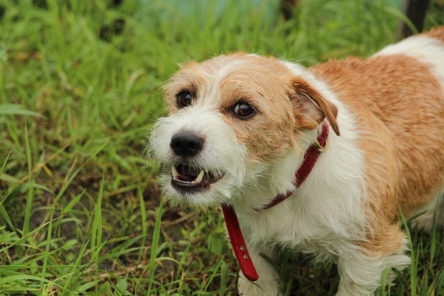 5 SITUATIONS QUI RENDENT LES SWEET DOGS AGRESSIFS