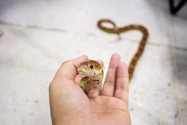 Ce que vous devez savoir sur les serpents en tant qu'animaux de compagnie