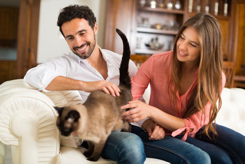 Un arbre à chat: un accessoire indispensable